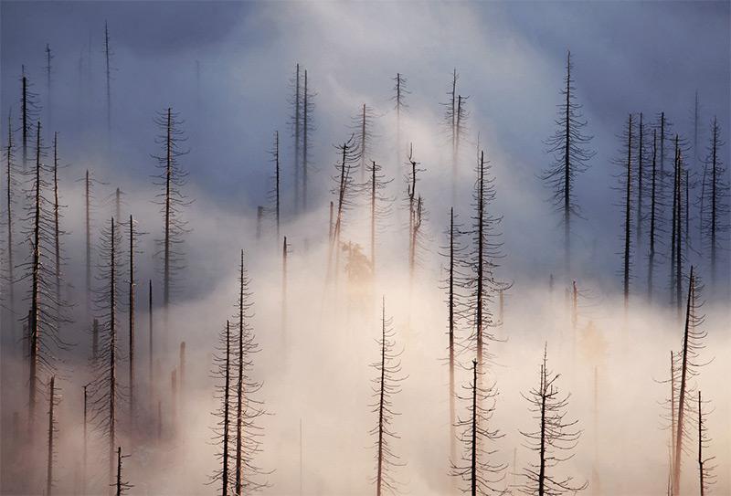 forests- Kilian-Schönberger-jearaf-7
