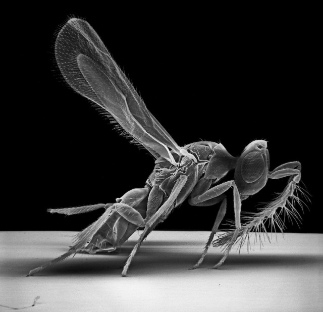 Insect-Photography-philips-david-jearaf-5